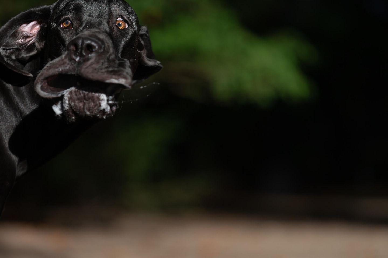 Haustier Fotowettbewerb: Hund macht Grimasse