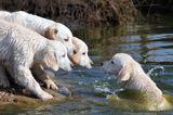 Haustier Fotowettbewerb: Hunde im Wasser