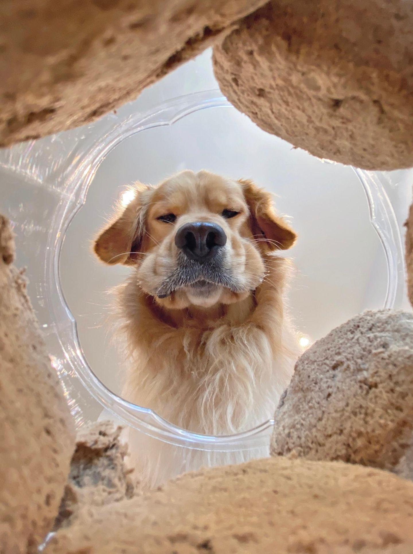 Haustier Fotowettbewerb: Hund spiegelt sich im Wasser
