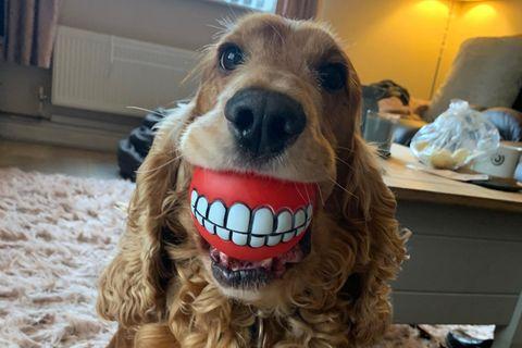 Haustier Fotowettbewerb: Hund mit Gebiss