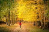 Eine Frau beim Herbstspaziergang