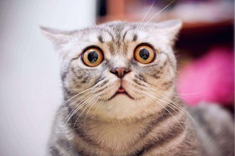 Katze mit großen Augen