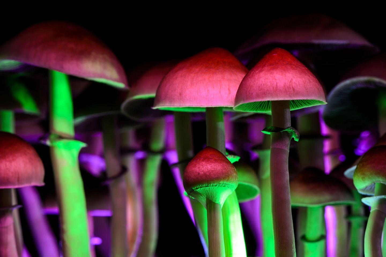 Halluzinogene Drogen: Pilze