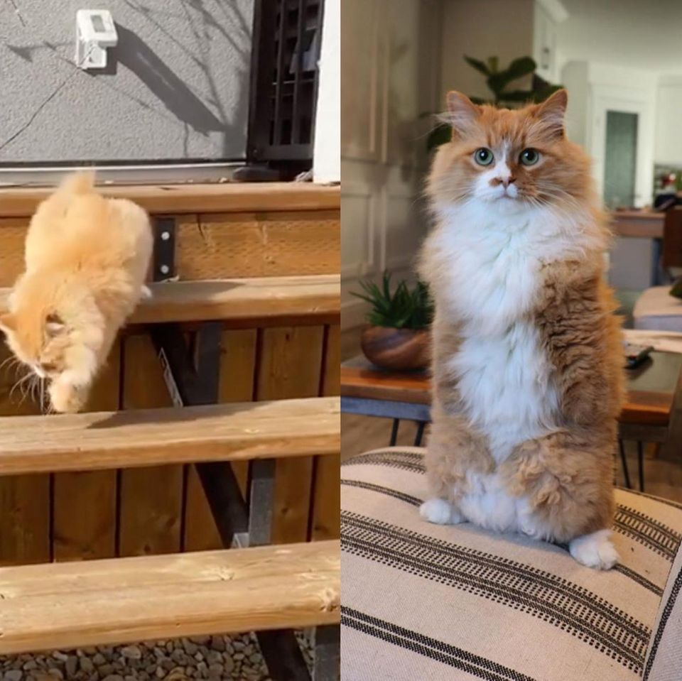 Zweibeinige Katze liebt ihr Leben