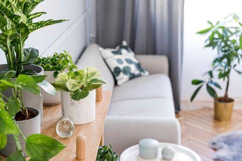 Zimmerpflanzen sehen nicht nur gut aus, sie tun auch unserer Gesundheit gut.