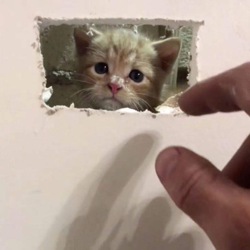 Katze wird aus Wand gerettet