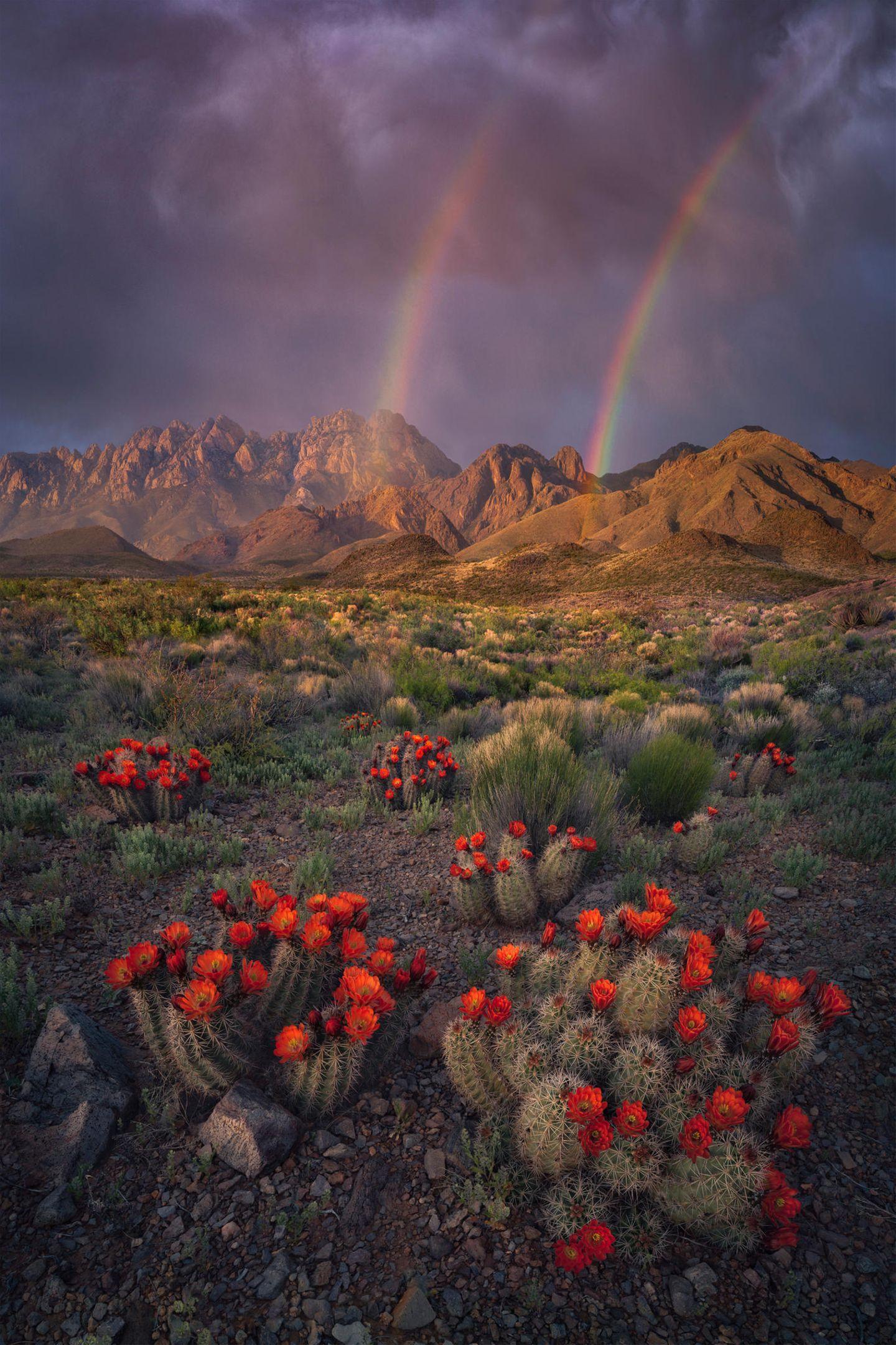 ILPOTY 2020: Berge mit Regenbogen