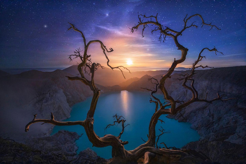 ILPOTY 2020: Mond und Baum