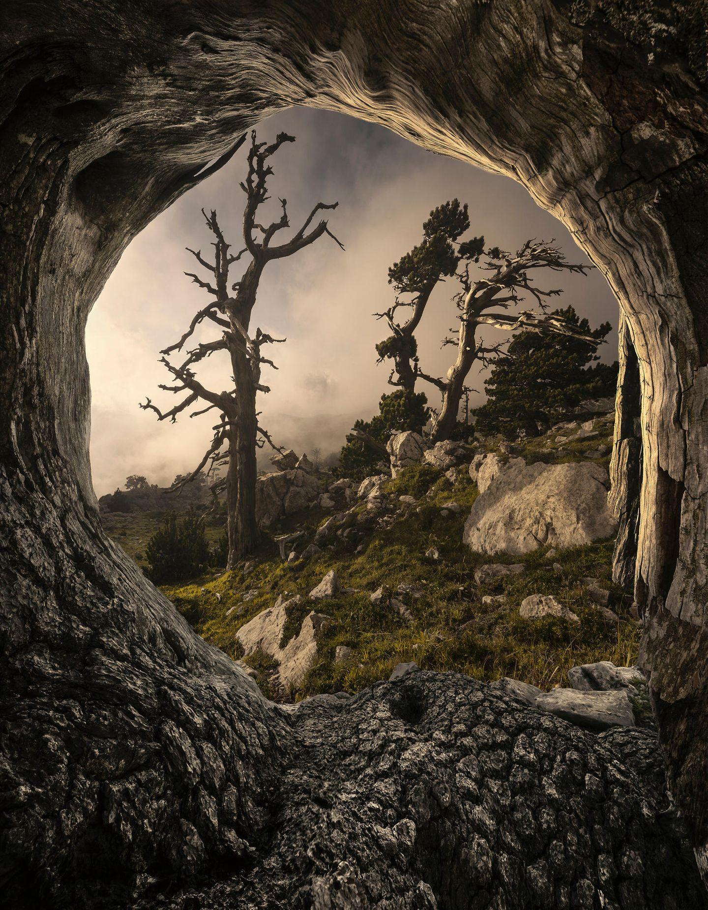 ILPOTY 2020: Bäume
