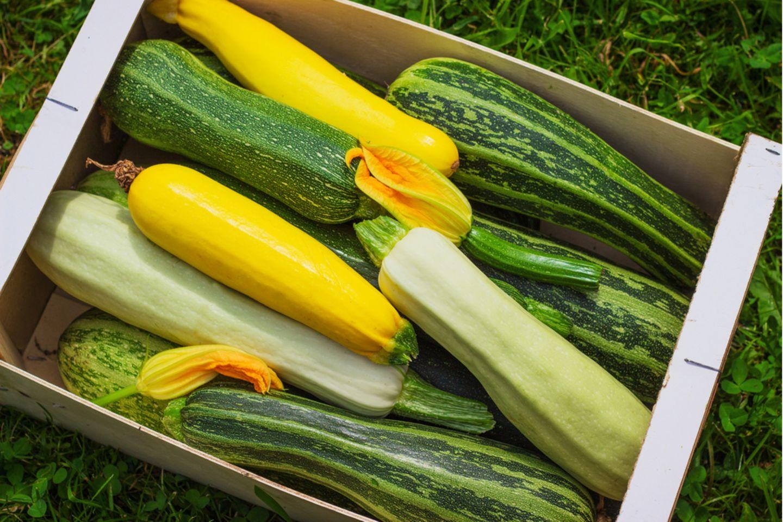 Zucchini gesund: Bunte Zucchini in einer Kiste