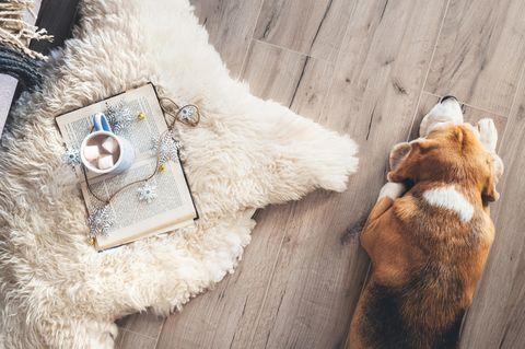 Zum Verschenken oder Selbstgenießen: Buch, Tee und Hund