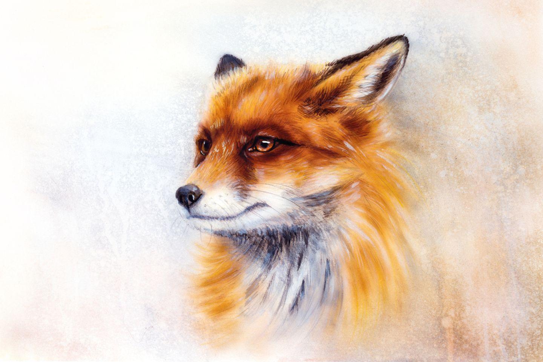 Krafttier Fuchs: Fuchs