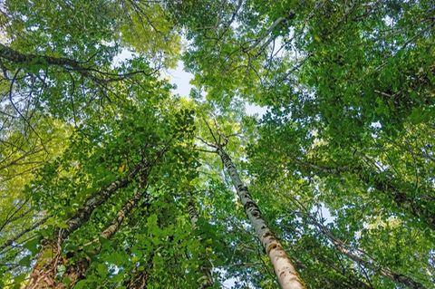 Geld anlegen: Bäume
