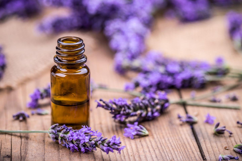 Hausmittel gegen Läuse: Lavendelöl