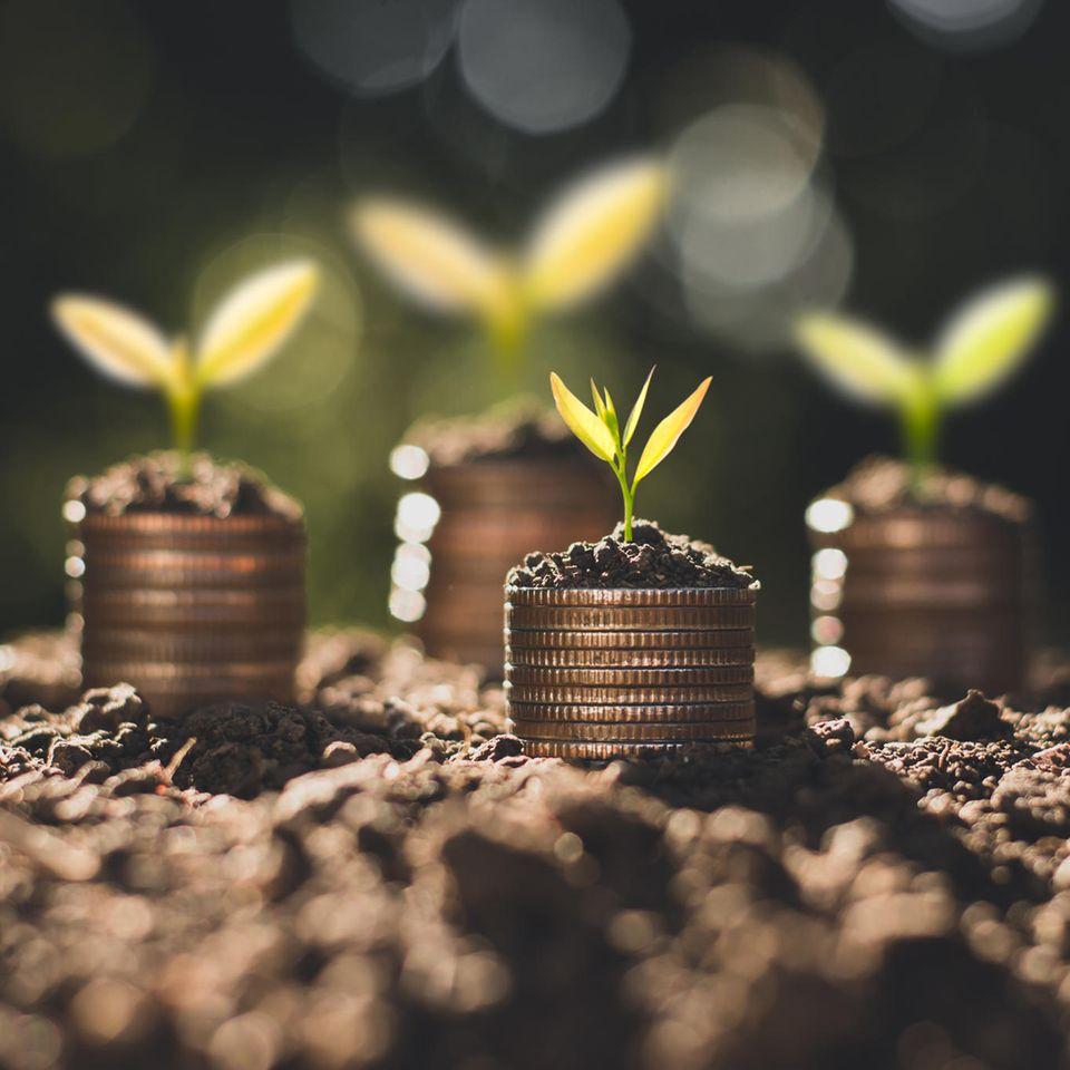 Aktien: Geld als Pflanzen