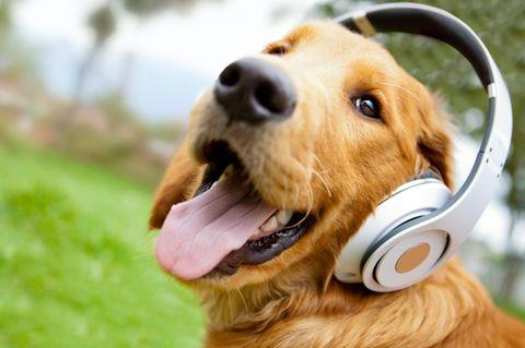 Raise The Woof: Der erste Song für Hunde