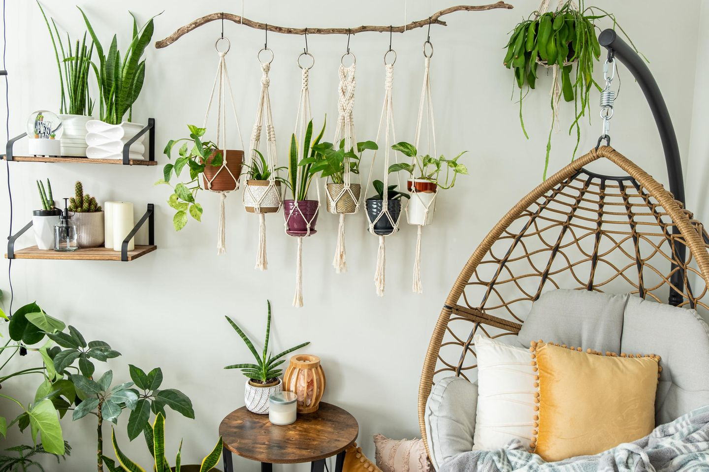 Hängepflanzen: Hängende Töpfe an der Wand