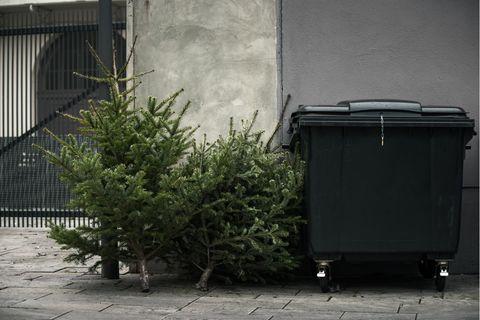 Wohin in diesem Jahr mit den Weihnachtsbäumen?
