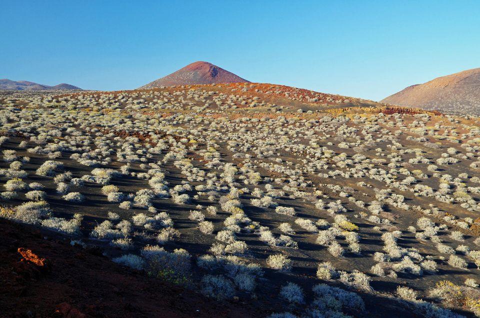 El Hierro: Hochland von El Hierro