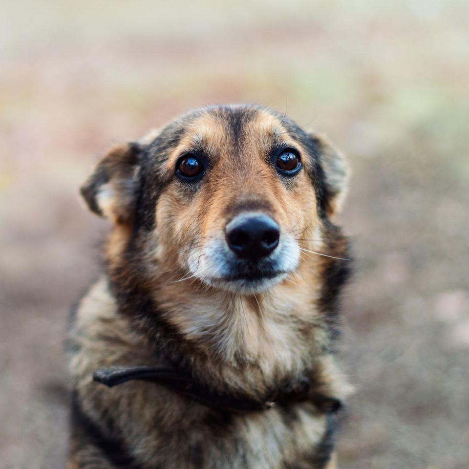 Hund wartet vor Krankenhaus auf Besitzer