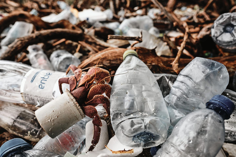 Ocean Photography Awards: Krebs in Plastikmüll
