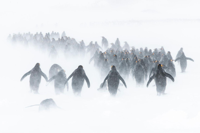 Ocean Photography Awards: Pinguine im Schnee