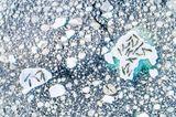 Ocean Photography Awards: Robben auf Eisschollen