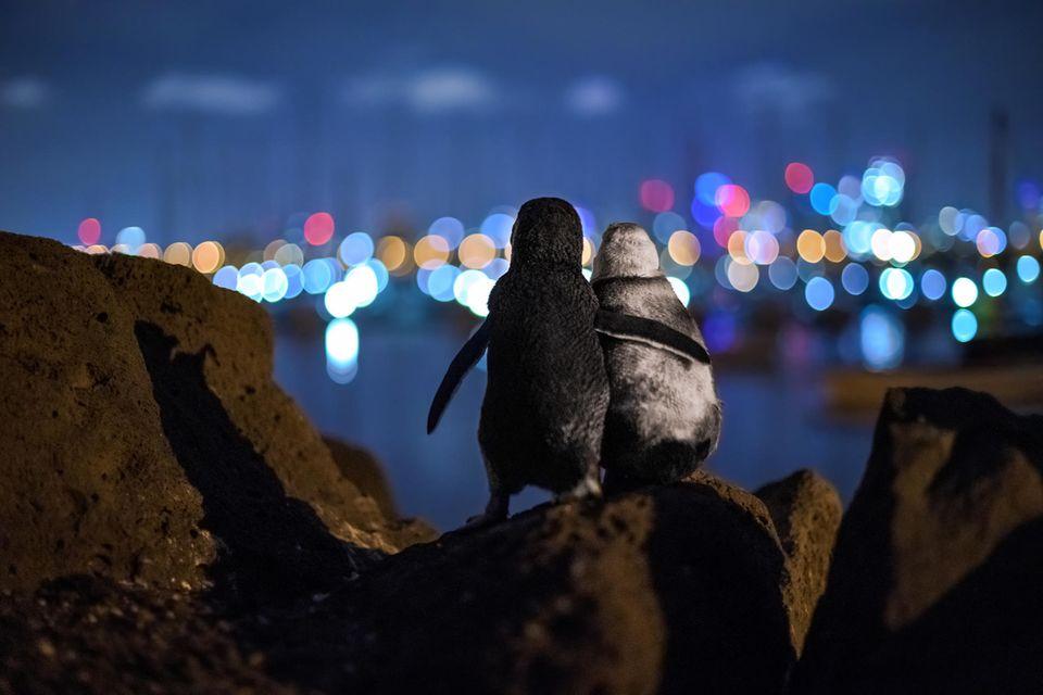 Ocean Photography Award: zwei Pinguine schauen aufs Meer