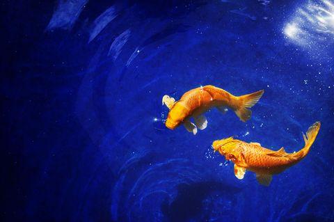 Aszendent Fische: Fische