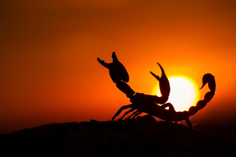 Aszendent zu passt zwilling mir skorpion wer sternzeichen Löwe aszendent