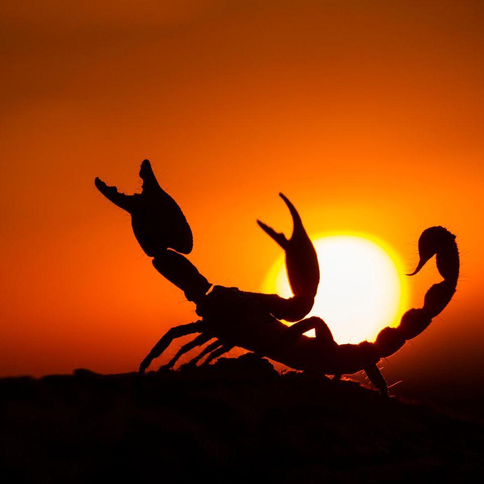 Aszendent Skorpion: Skorpion