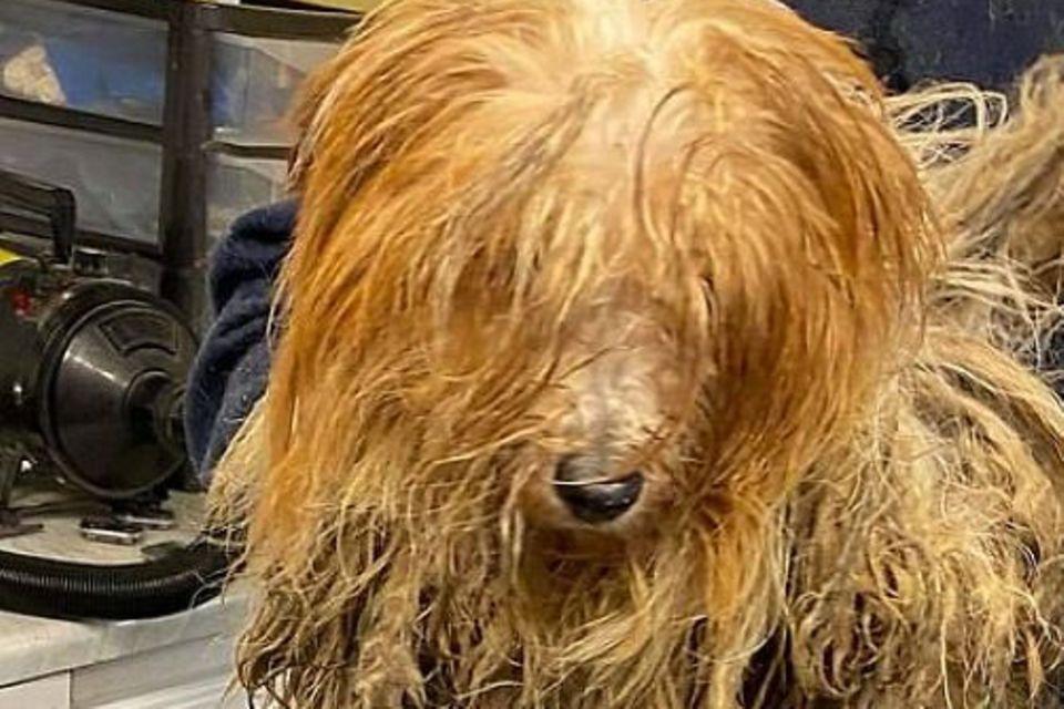 Hunderettung: verwahrloster Hund