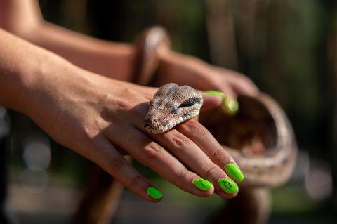 Schlangenträger: Frau hält Schlange in den Händen