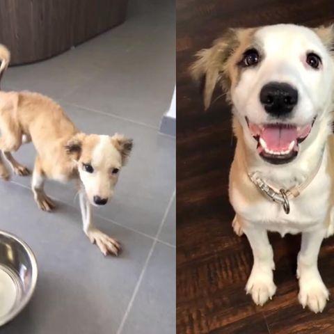 Hund nach Adoption