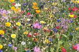 Umweltbewusst leben: Wildblumenwiese