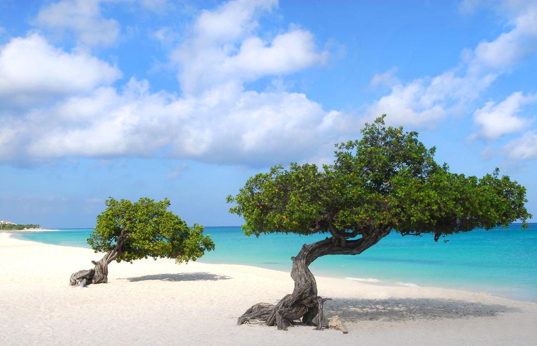 Der Eagle Beach auf der kleinen niederländischen Karibikinsel Aruba ist traumhaft schön mit seinem klaren Wasser und seinem breitenSandstrand. Eagle Beach gehört aber zur Hauptstadt Oranjestad und ist daher kein Geheimtipp!