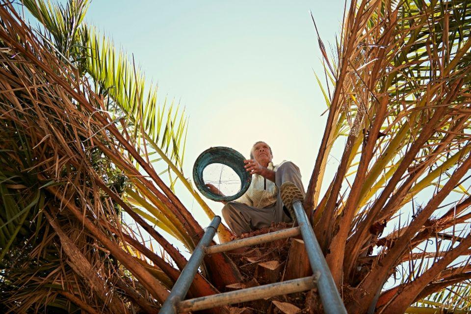 La Gomera: Manolo auf der Palme