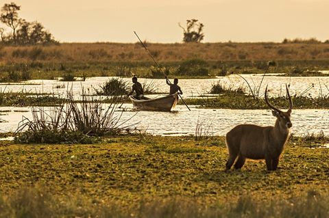 Uganda: Antilope im Nationalpark