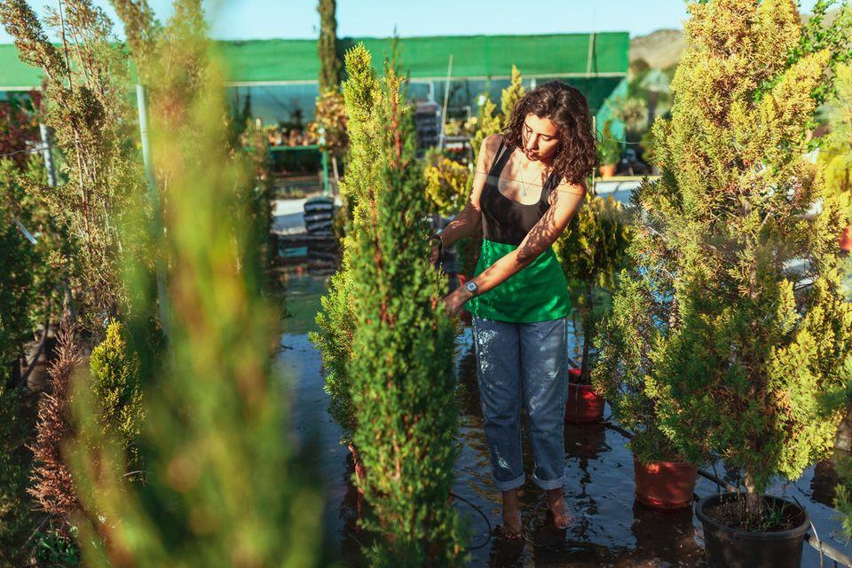 Gartenarbeit: Frau schneidet Hecke