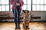 Bester Freund der Frau: Hund sitzt neben stehender Frau