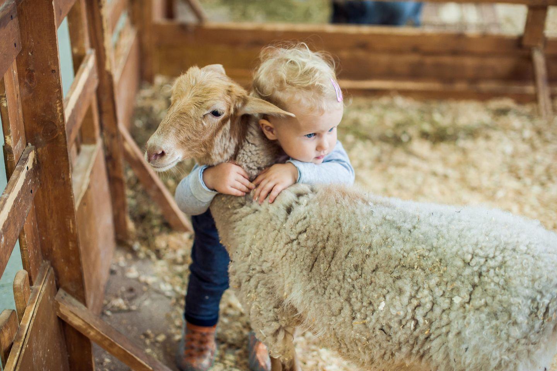 Corona aktuell: Kind umarmt Schaf