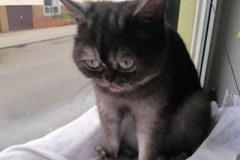 Traurigste Katze
