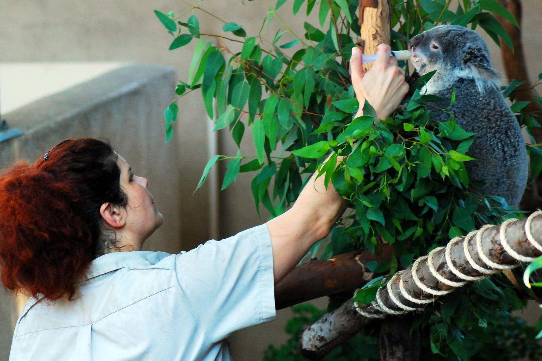 Zoologe: Zoologin