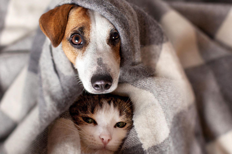 Haustiere mit Corona