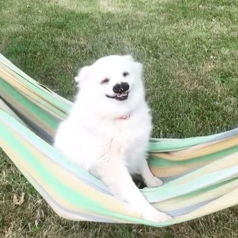 Hund mit Gaumenspalte