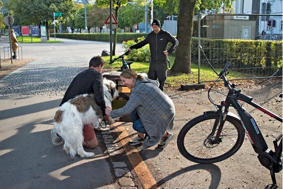 Camping am Bodensee: Fahrradanhänger für den Hund