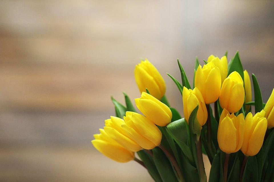 Tulpen länger frisch halten: gelber Strauß Tulpen