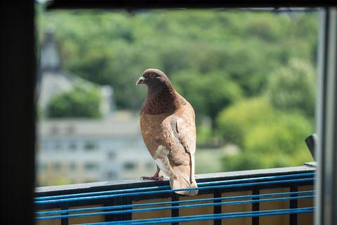 Tauben verjagen vom Balkon