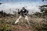 World Press Photo 2021: Mann zwischen Heuschrecken