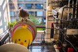 World Press Photo 2021:Taube sitzt auf Geschirr